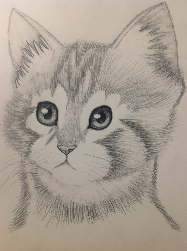 Kitten pencil drawing by bbbcomiclover1