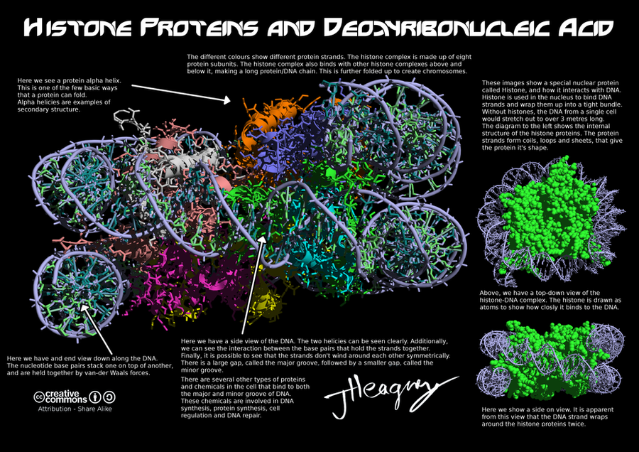 Science Poster  Histone Complex By Ancienthart On