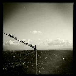 The birds by cheechwizard