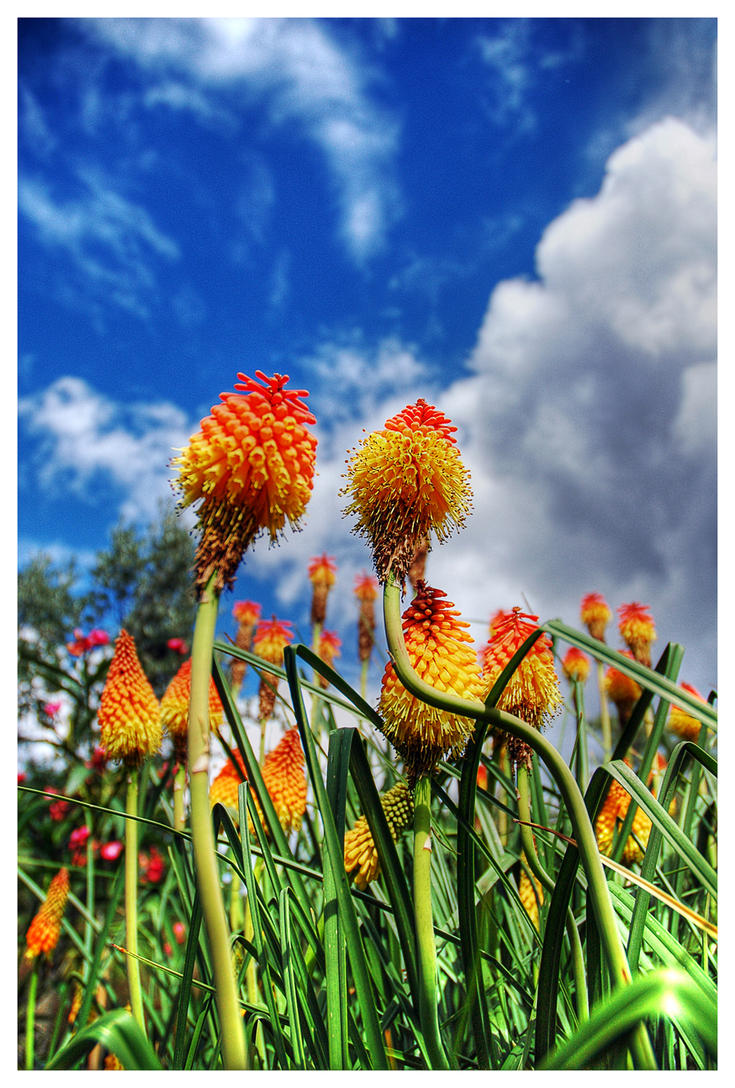 flowering by cheechwizard