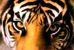 Biggarachi's Profile Picture