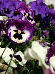 flowers2010-7