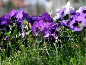 flowers2010-6