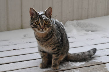 Baby cat in snow by mega-cool-midori