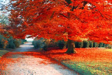 Autumn002 by KiaraJoy