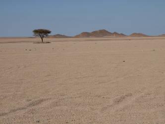 Desert Tree by ElinMagdalena