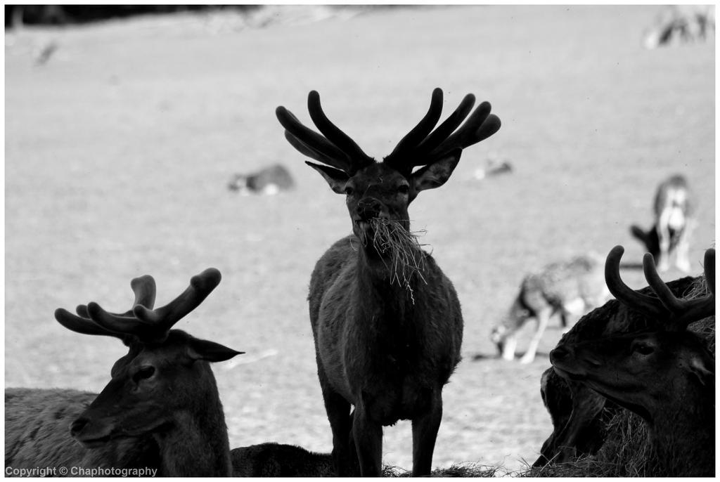 Cerf - Deer (2014) by Toutchatrien