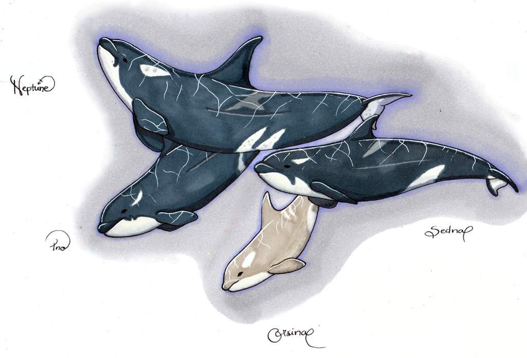 Our resident orcas by WolverineGuardian