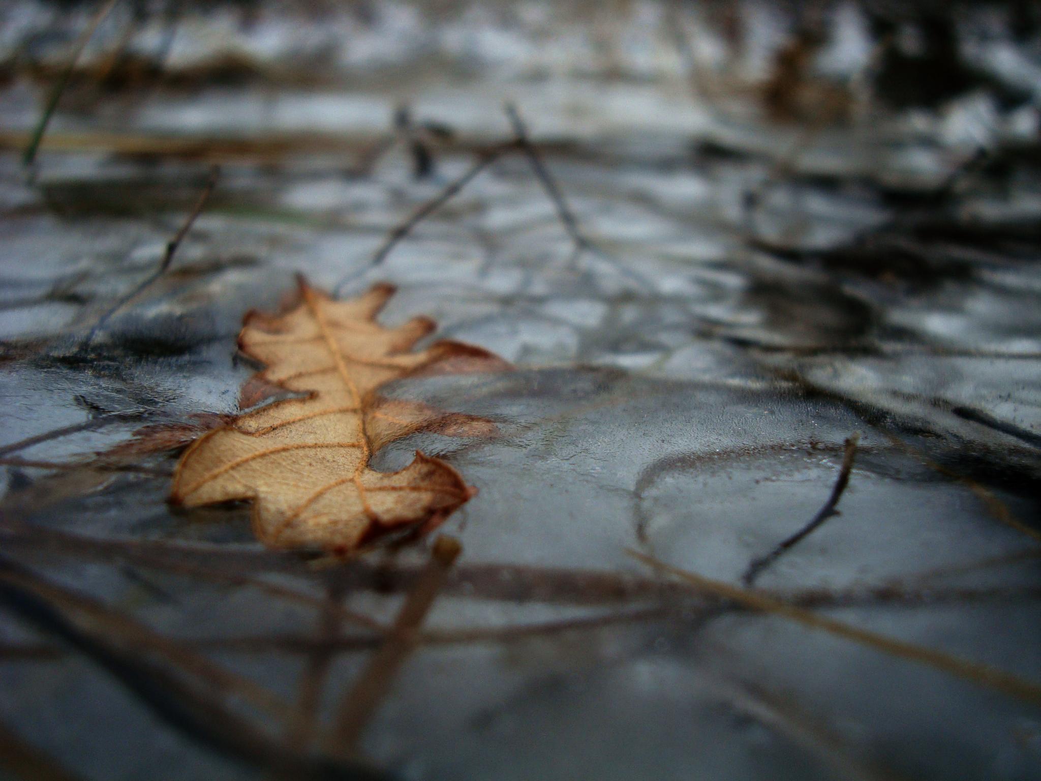 Leaf by aerendial