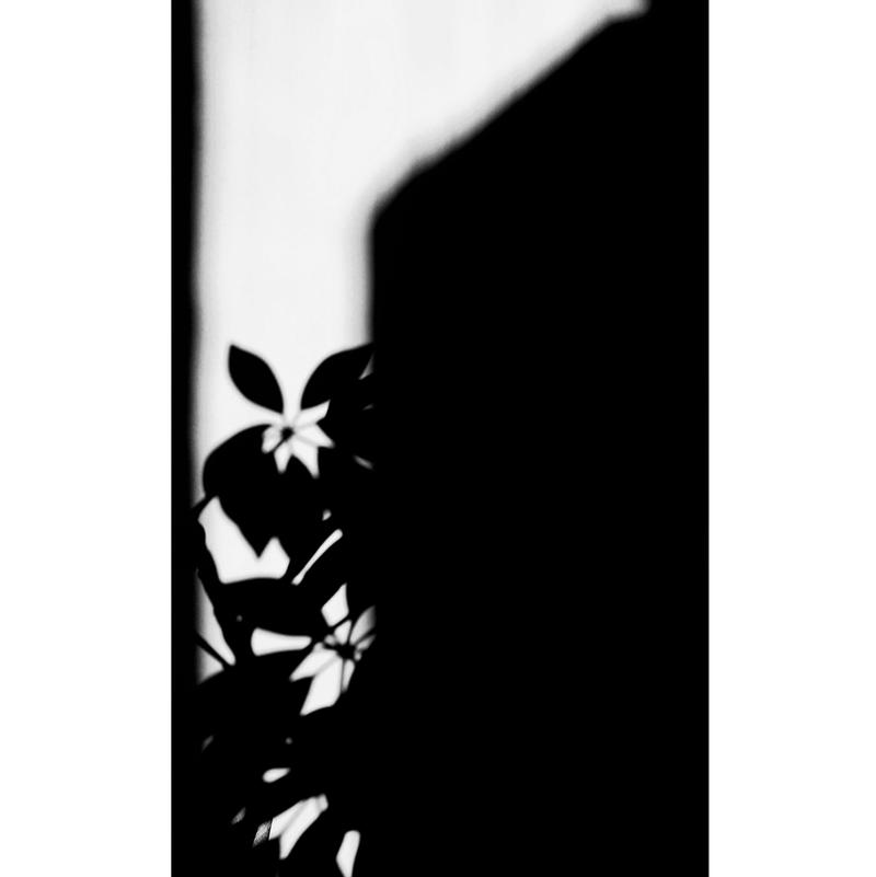 shadowplay no44567 by aerendial
