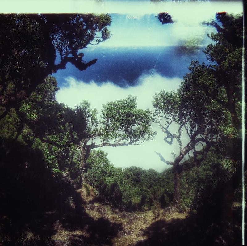 Gaia by aerendial