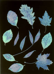 leaves by aerendial