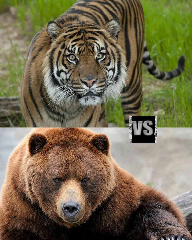 Have Fun with the Tiger vs. Bear No Download Slots