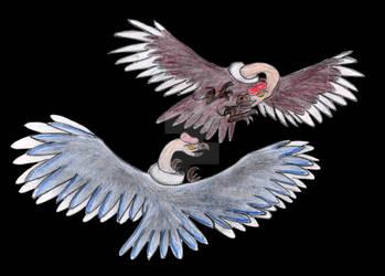 Condor Showdown