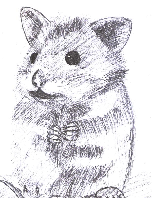 Hamster sketch by Espumita on DeviantArt