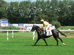 Thoroughbred Stock by Feuersglut