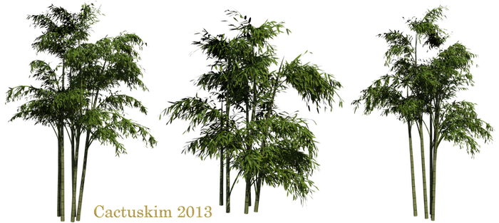 Bamboo PNGs_Rendered by Cactuskim