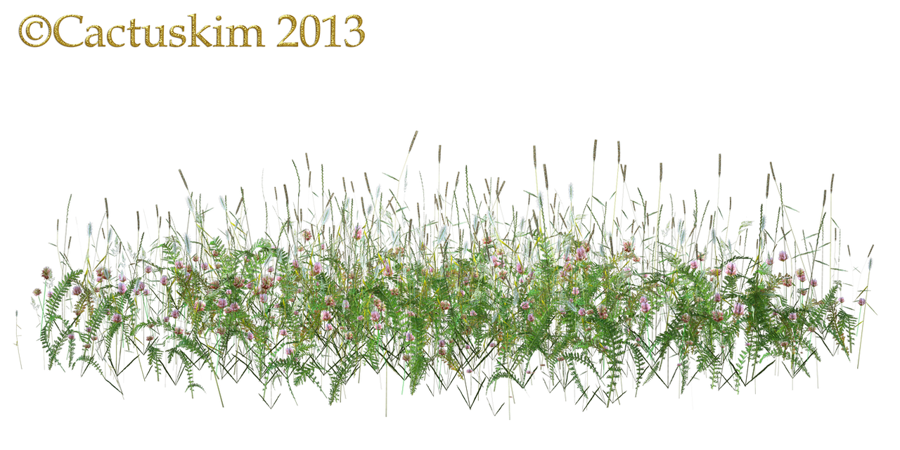 Wild Flowers and grass/weeds PNG_KL by cactuskim