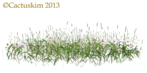 Wild Flowers and grass/weeds PNG_KL