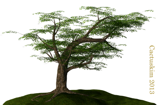 Tree on the Hill_PNG_KL