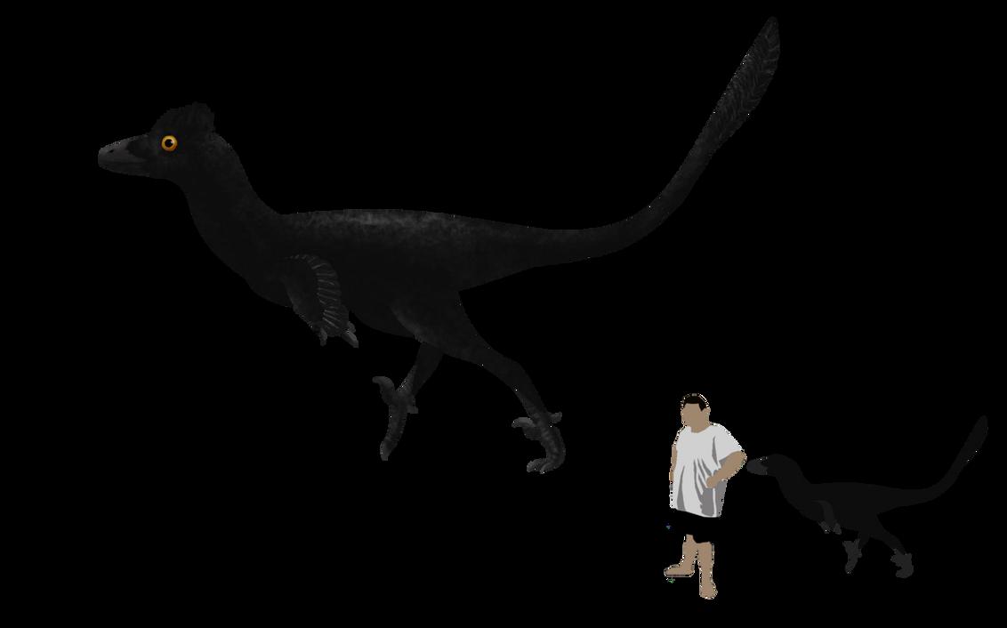 troodon formosus by paleop on deviantart