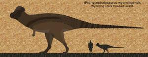 Pachycephalosaurus longnamensis