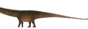 Diplodocus 1/13/17