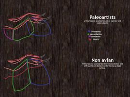 Non avian Bird diagram by Paleop