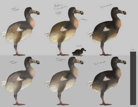 Dodo Contest reference