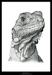 .: Iguan Iguana :.