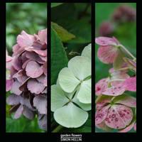 Garden flowers by frigobox