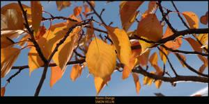 Autumn Orange by frigobox