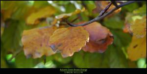 Autumn Green Brown Orange by frigobox