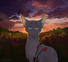 The cat and the sunset