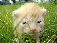 baby cat carm by rayncarmrox123