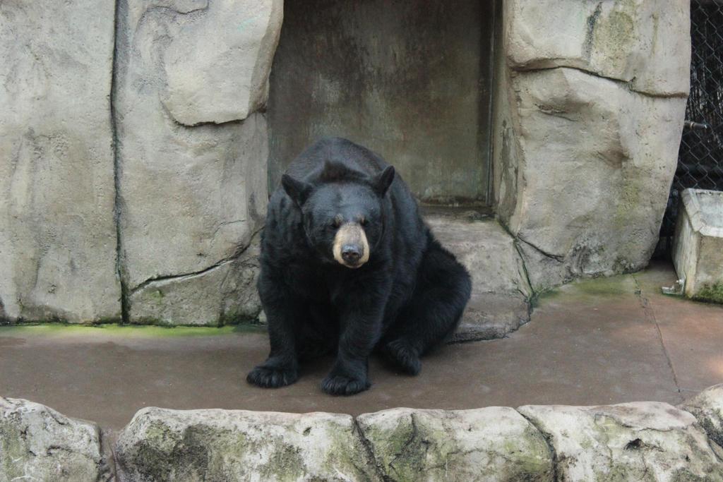 Grumpy Bear by VolpeTrickster