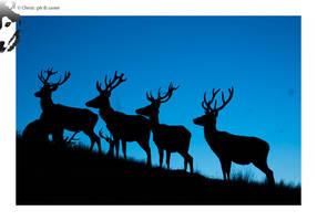 Red Deer 01 by BottledLights