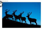 Red Deer 01