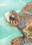 Turtle by JennyHaslimeier