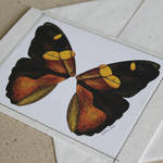 Butterfly greeting card 01