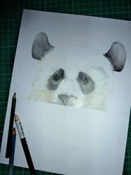 Panda WIP by JennyHaslimeier