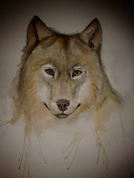 Wolf watercolour by lilyhosegood