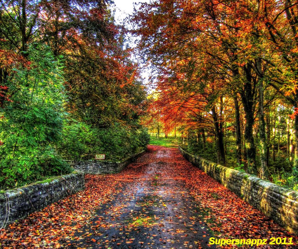 Autumn blends by supersnappz16