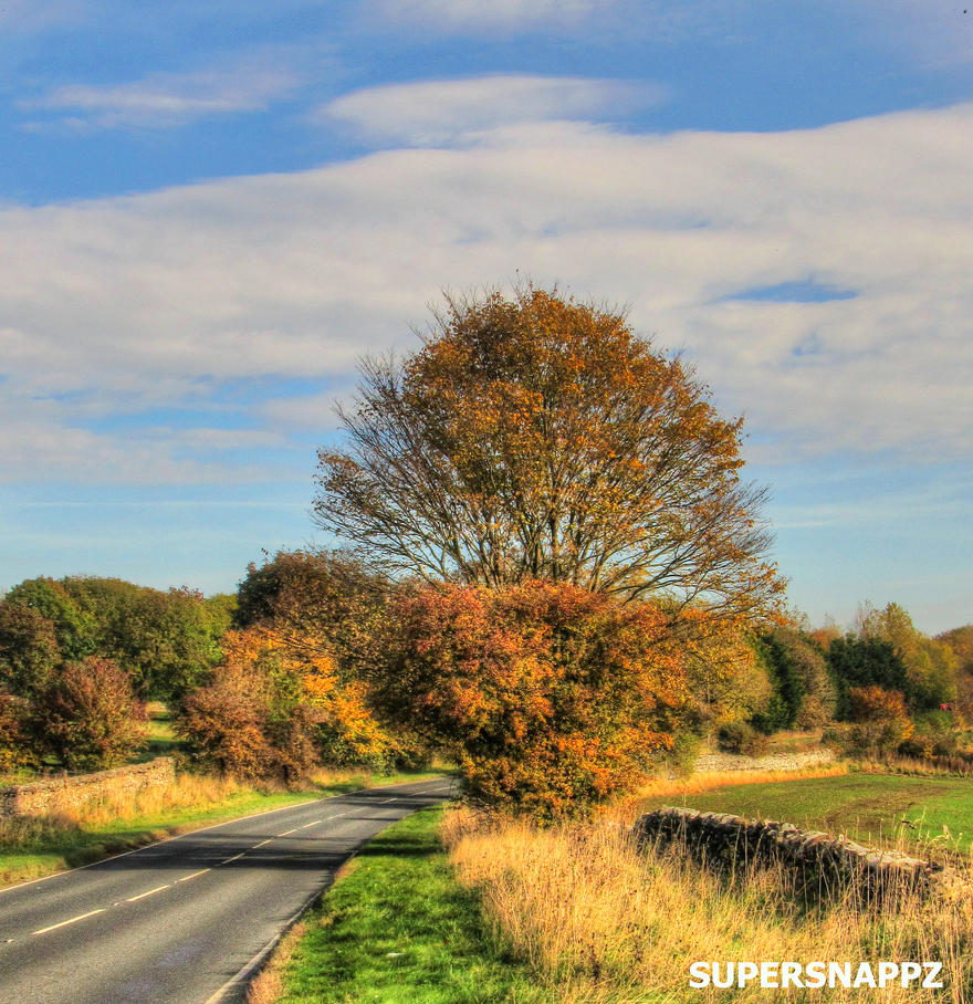 Autumn Road 2 by supersnappz16