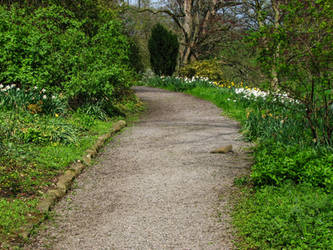 Curved path stock image 1 by supersnappz16