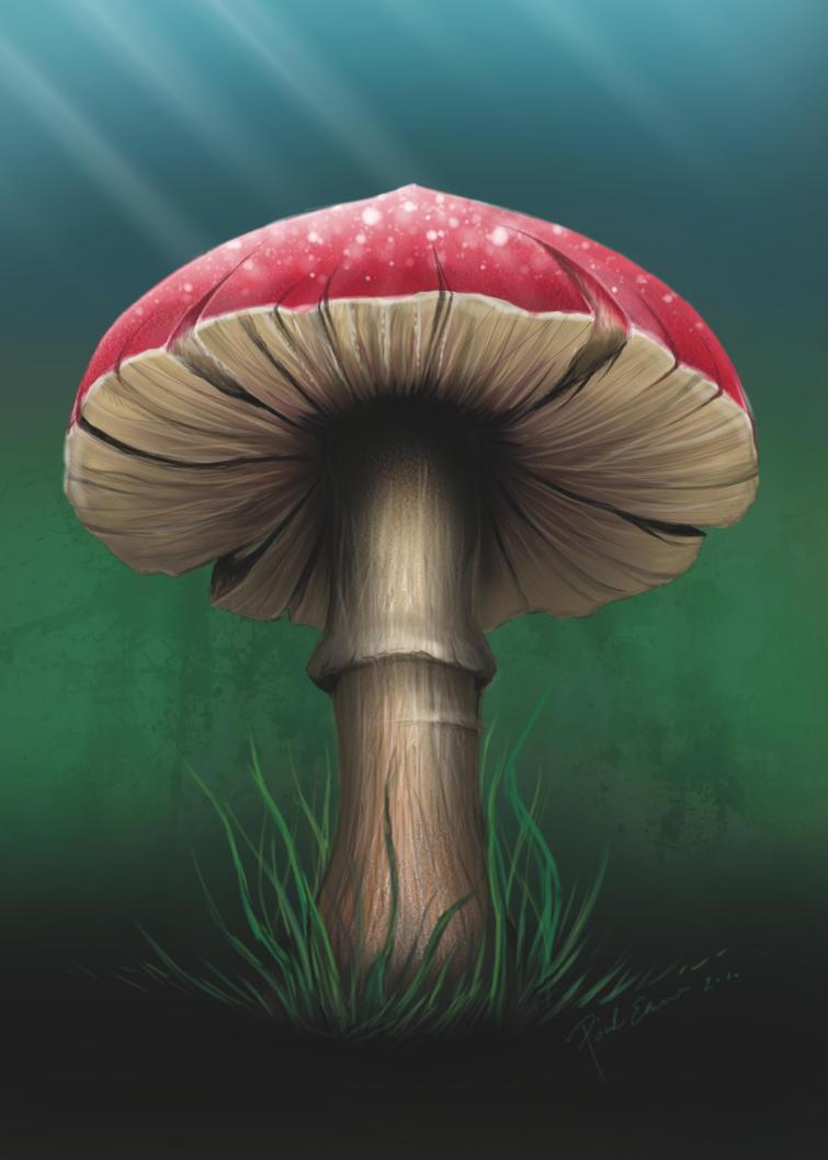 Magic Mushroom by emesemese