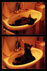 i love you, mr. water-tap by Bowie-Spawan