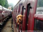 It's a dog on a train