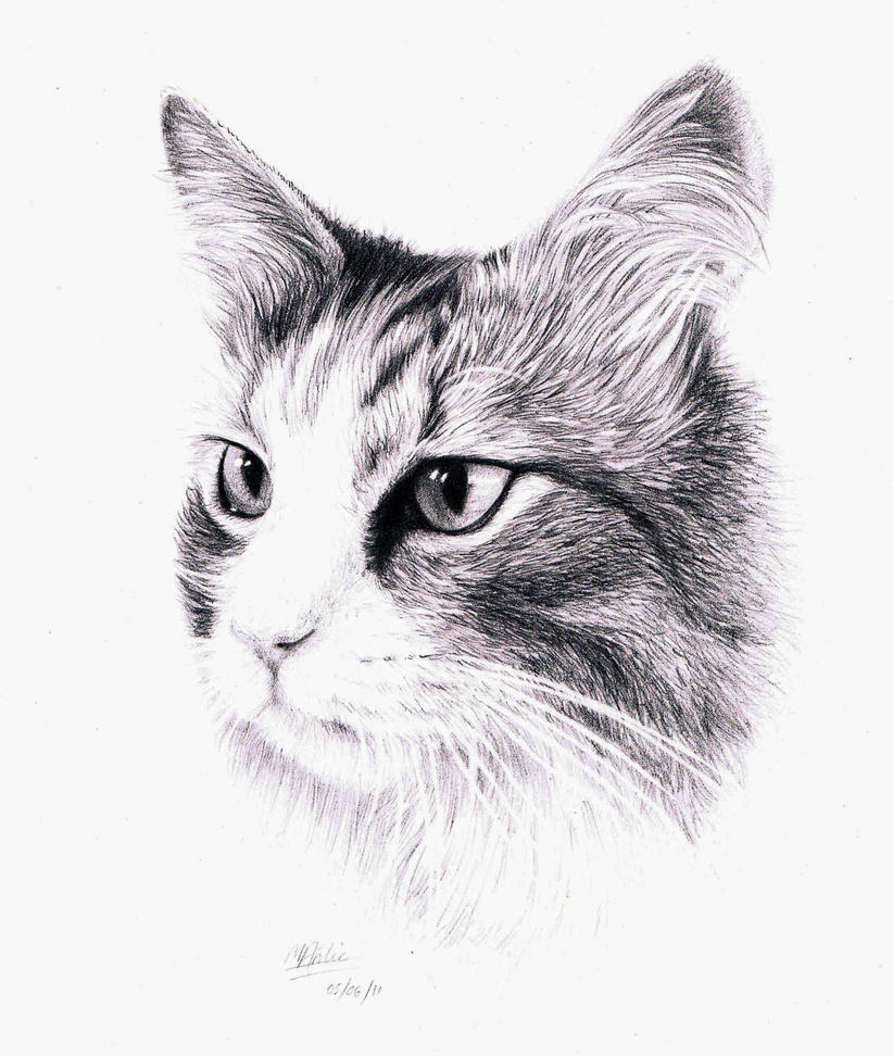 A Drawing Of A Cat By Atarial On Deviantart