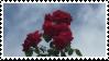 1 / rose stamp by gairdens